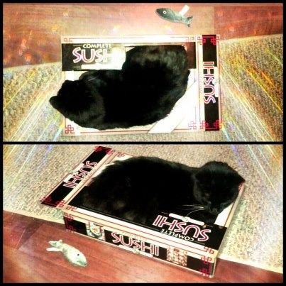 Black Kitty again... in yet another box sleeping. He's a sushi kitty.